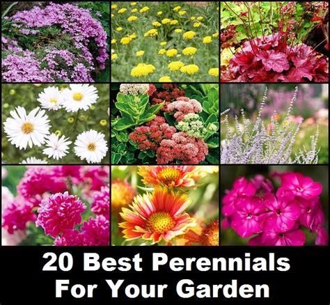 20 best perennials for your garden