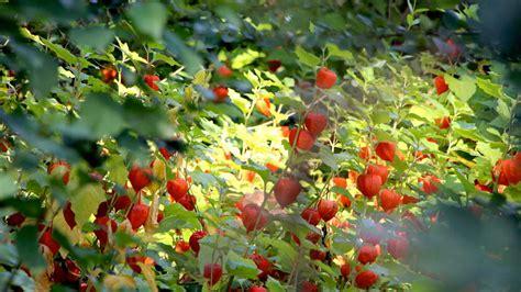 Garten Pflanzen Jahreszeit by Mannheim Luisenpark G 228 Rtner Erkl 228 Rt Region