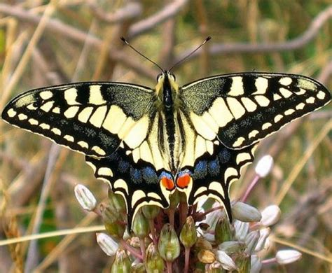 imagenes mariposas raras lista las mariposas m 193 s hermosas del mundo