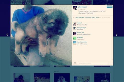 puppy instagram instagram is unwittingly becoming a puppy mill advertiser digital trends