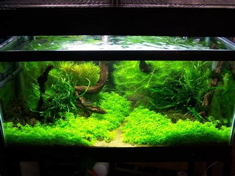 freshwater aquascaping ideas this reminds me of my old biotope aquarium aǫᴜᴀʀɪsᴛ