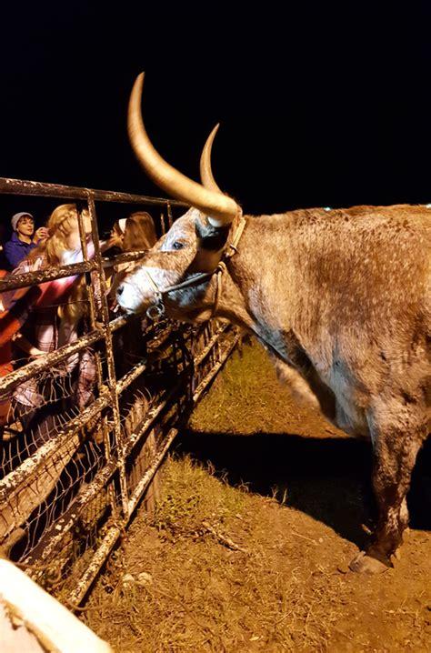 don strange ranch christmas lights holiday at the ranch christmas light fest at don strange
