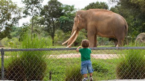 imagenes de animales zoologico image gallery el zoologico