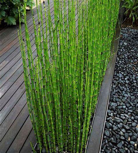 Bambou En Pot Intãģ Rieur Achetez En Gros Int 233 Rieur De Jardin En Bambou En Ligne 224