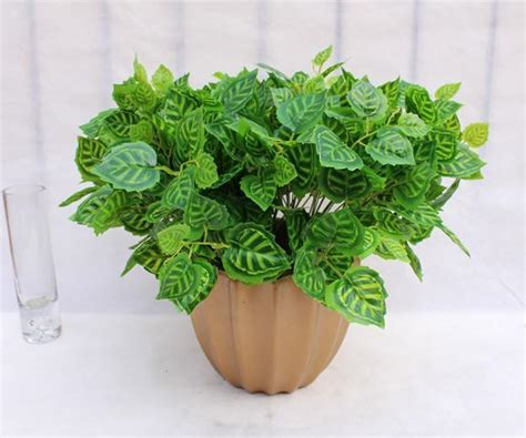 mini house plants best small house plants