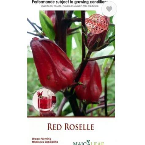 Teh Bunga Rosella Merah bibit bunga rosella merah 0856 0856 6034