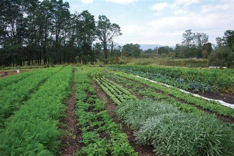 Till You Never Weed Again Gardening Hudson Valley No Till Vegetable Garden