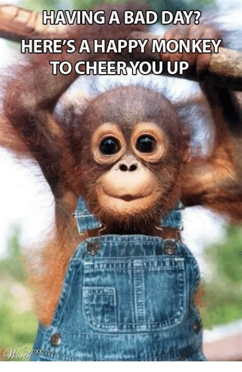 Having A Bad Day Meme - having a bad day here s a happy monkey to cheer you up