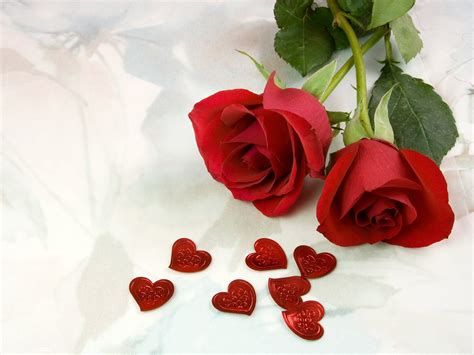 wallpaper rose flower beauty quality wallpapers beautiful rose flowers pictures