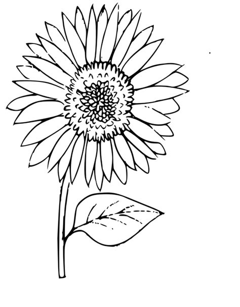 Outline Of Sunflower To Colour by Sunflower Outline Images Search
