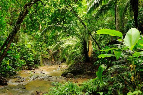 Colombia Jungle an overview of colombia s darien gap moon travel guides
