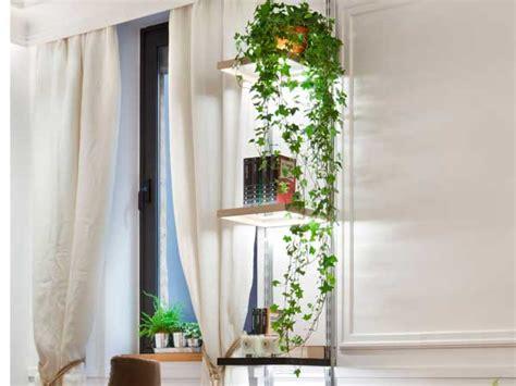 decorar rincon con plantas decorar tu casa con plantas