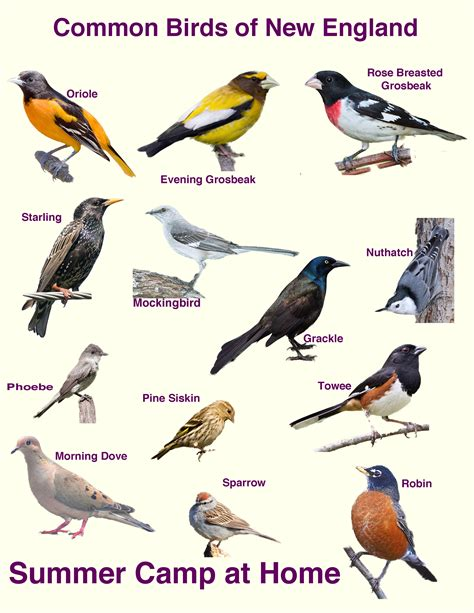 best 28 birds identification british birds