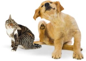 cat facts the pet parent s a to z home care encyclopedia books caring for your best friend v i p petfoods