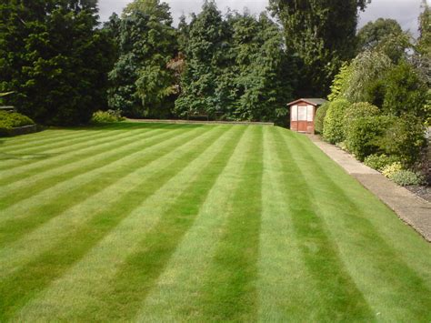 Greenthumb Croydon Your Local Lawn Care Specialists Green Thumb Landscape