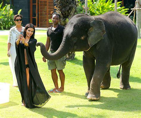 kim kardashian and elephant kim kardashian selfie uğruna fil saldırısına uğradı diken