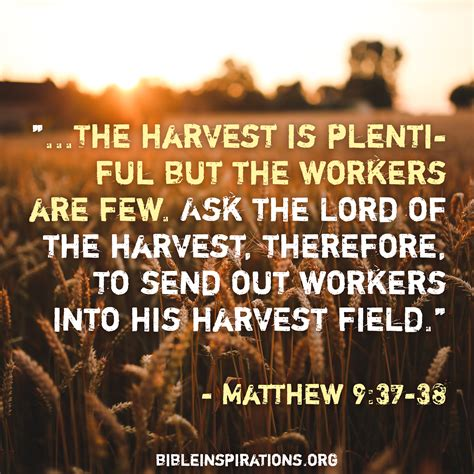 the harvest is plentiful but the workers are few the harvest is plentiful but the workers are few bible