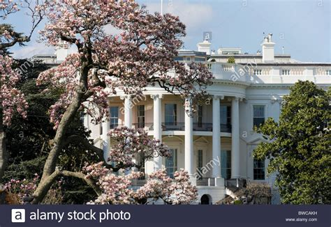 buy house in dc washington dc the white house in spring springtime with magnolia in stock photo