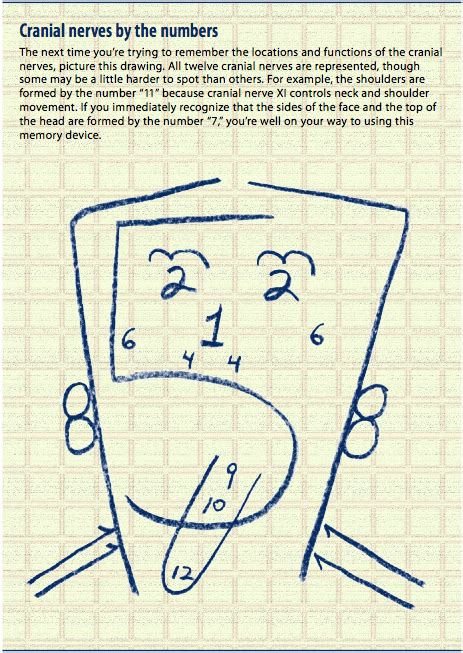 Easy Ways To Remember The Name Of The You Just Met by 40 Tips And Mnemonics In Remembering The 12 Cranial Nerves
