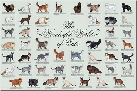 types of cats friday films identifying cat breeds 171 adopt a lapcat