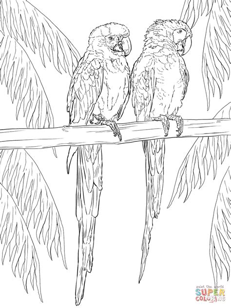 of scarlet macaw free coloring pages