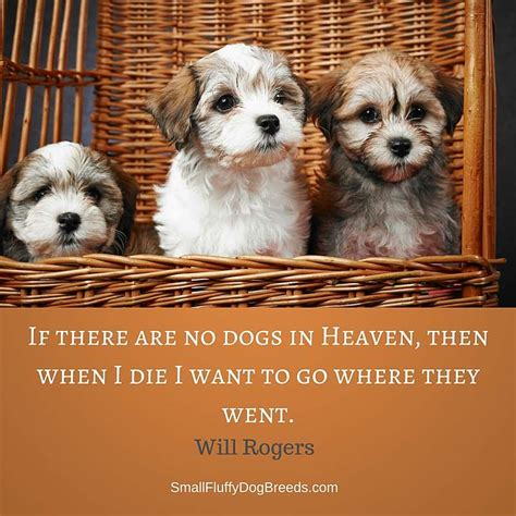where do dogs go when they die quotes about dogs great quotes about s best friend