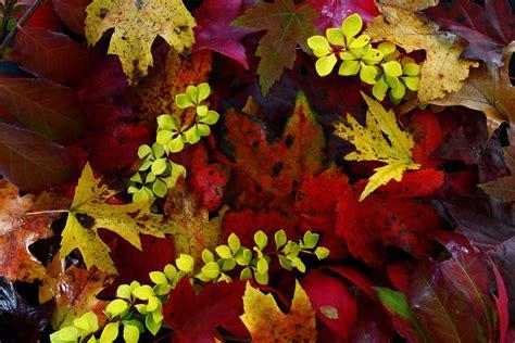 colors of autumn colors of autumn leaves dan330