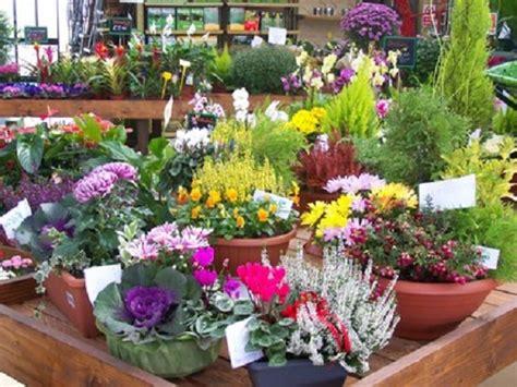 come mandare fiori a domicilio come mandare i fiori come regalare fiori secondo il loro