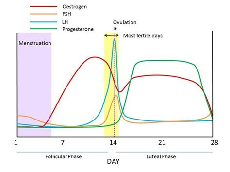 can ovulation cause mood swings the 25 best ovulation symptoms ideas on pinterest