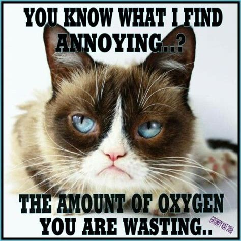 Annoying Cat Meme - 1000 images about grumpy cat i love this cat on