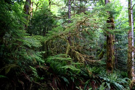 How To Replace Sub Floor by The Lush Beauty Of A Temperate Rainforest