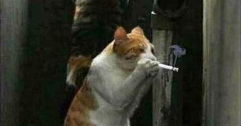 Closet Smoker by Closet Smokers Lol
