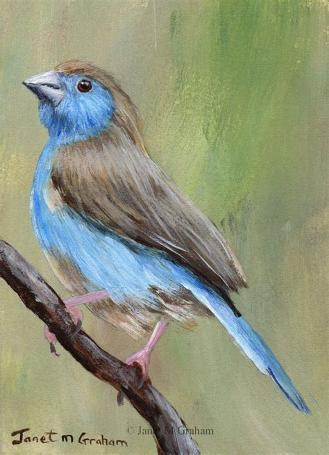 painting birds acrylic 376 best images about birds in on