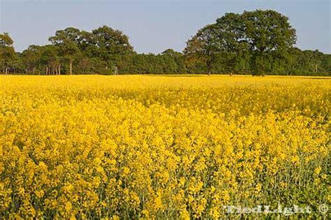 wilde bloemen in duitsland kranenburgia kranenburg cranenburch cranenburgh