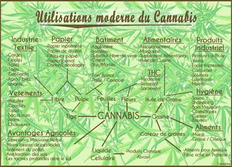 le pour culture de cannabis le cannabis qu est ce que c est