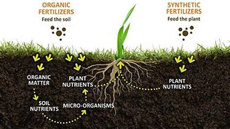 is fertilizer organic matter in soil bulk and granular compost for lawn and garden