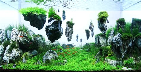 aquascaping layouts the 2nd round grading top 200 layouts the international