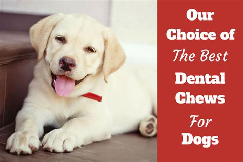 best chew for puppies best dental chews for dogs roundup review and buying advice