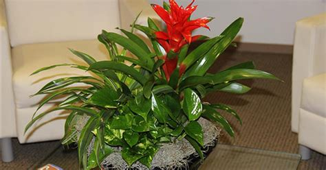 indoor plant arrangements indoor plant service houston plants for office home