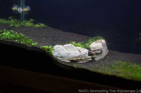Aquascaping Rocks by Aquascaping Rocks And Roots Buscar Con