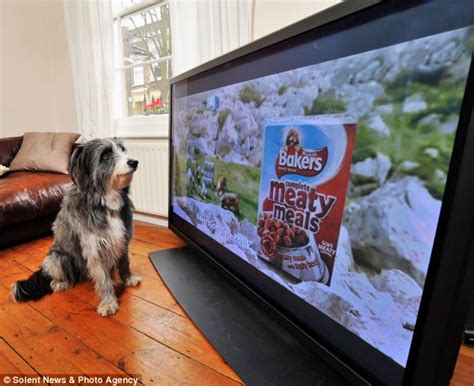 sounds only dogs can hear tv advert for dogs frequency is far high for pet owners to hear it daily