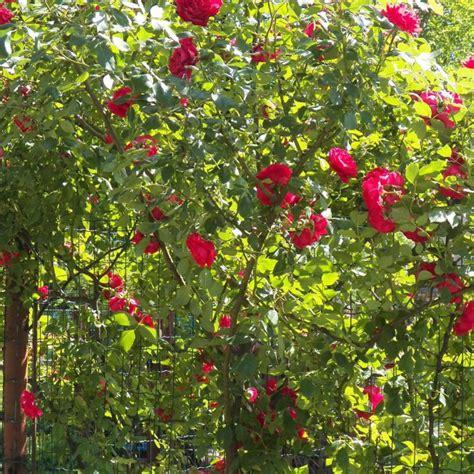 alibabki kwiat jednej nocy alibabki kwiat jednej nocy tekst piosenki tłumaczenie