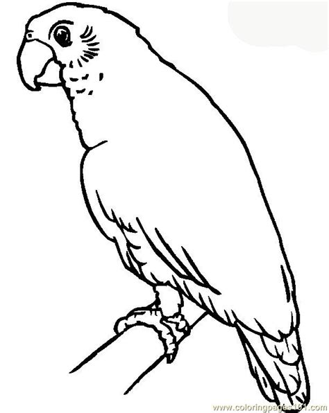 parrot coloring page parrot coloring page free parrots coloring pages