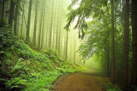imagenes extrañas en el bosque el poder curativo del bosque i el correo del sol