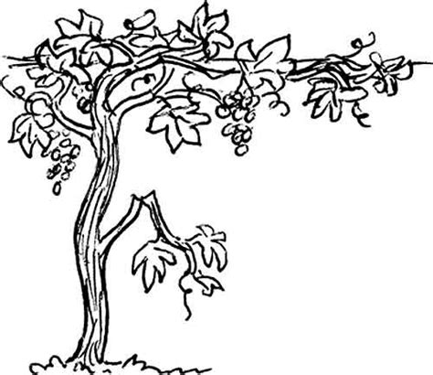 Coloring Page Vine And Branches by Vine And Branches Coloring Pages