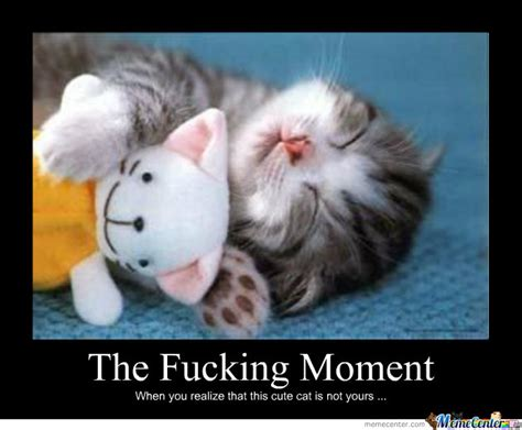 Funny Fucking Memes - the fucking moment cat meme cat planet cat planet