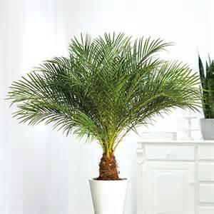 palme terrasse palme f 252 r terrasse carprola for