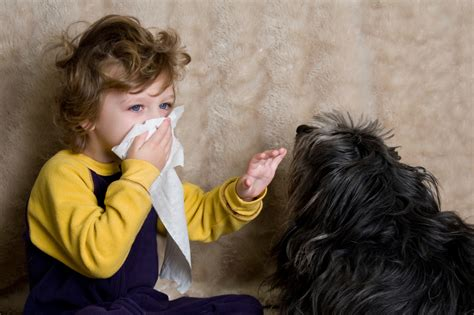 allergies to dogs hypoallergenic pets for with pet allergies hirerush