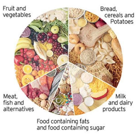 food wheel template advice for a balanced healthy nutrition shed your weight