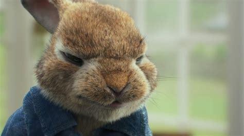 Rabbit L rabbit l eredit 224 di beatrix potter nella nuova